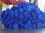Beautiful-bunceh-of-blue-roses_grande
