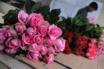 Seorang petani mengerjakan proses pembungkusan bunga mawar pada kebun budidaya di Parongpong, Kabupaten Bandung Barat, Jawa Barat, Rabu (12/2). Permintaan dan penjualan Bunga yang termasuk Genus Rosa tersebut mengalami peningkatan hingga 100 persen dua hari menjelang Valentine. ANTARA FOTO/Novrian Arbi/Koz/mes/14.